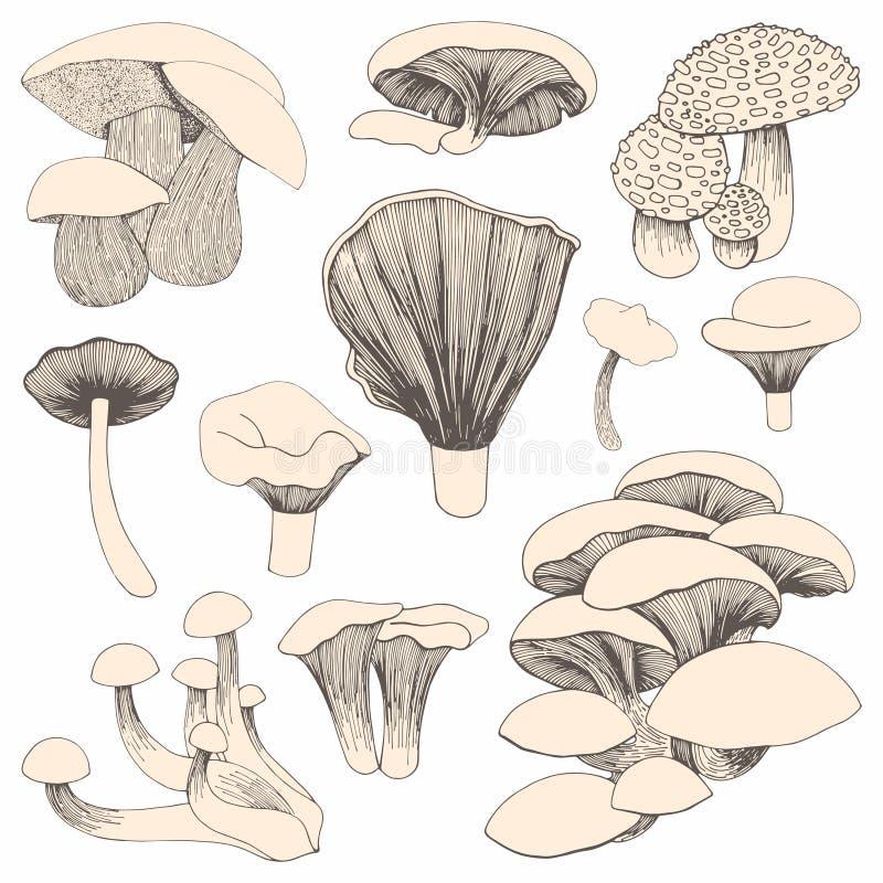 Cogumelos Desenho da mão Um grupo de ilustrações do vetor para o projeto e a decoração ilustração stock