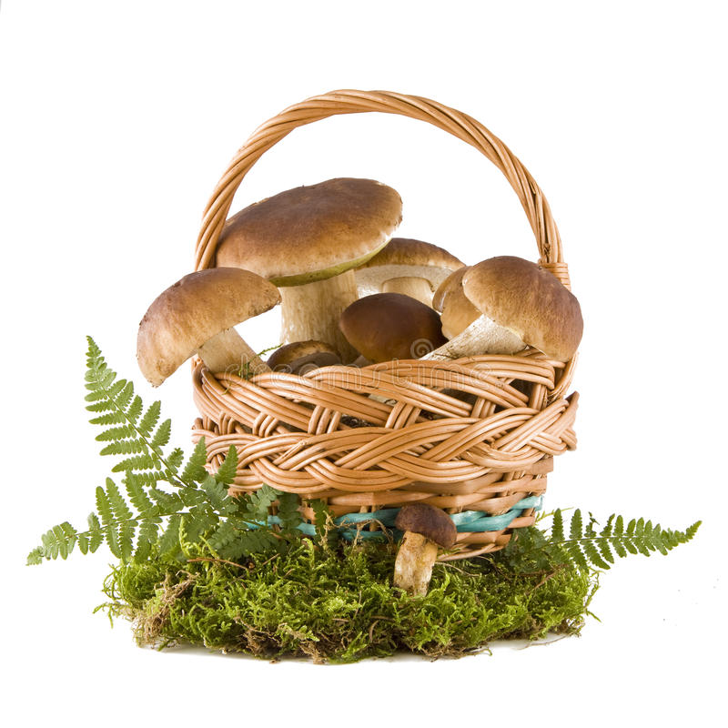 Cogumelos do boleto em uma cesta foto de stock