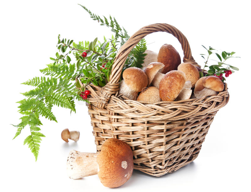 Cogumelos do boleto na cesta de vime imagens de stock royalty free