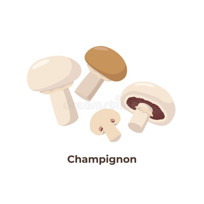 Cogumelos do cogumelo isolados no fundo branco, ilustração do vetor no projeto liso Grupo de cogumelos do portobello ilustração royalty free