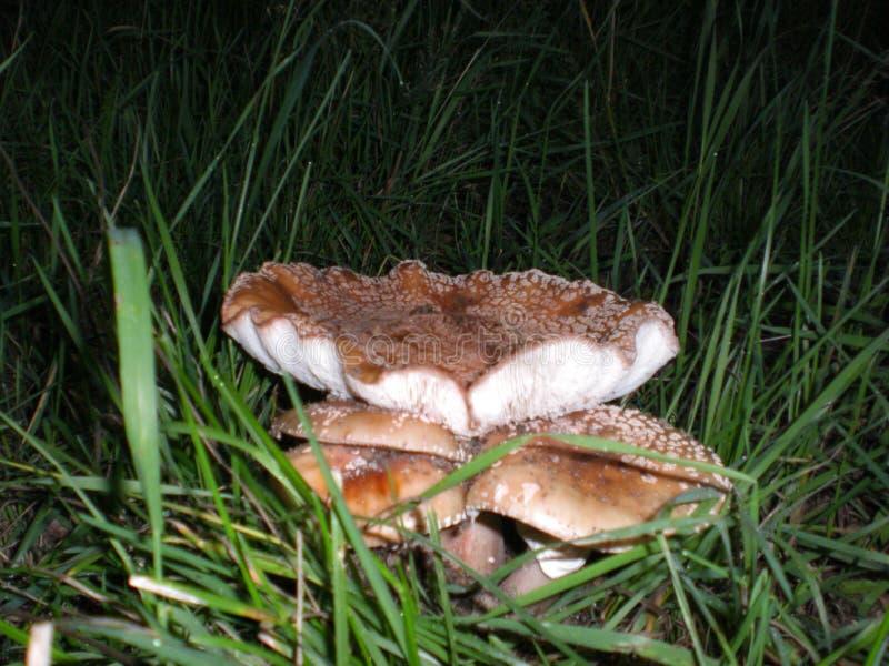 Cogumelos e grama imagem de stock royalty free