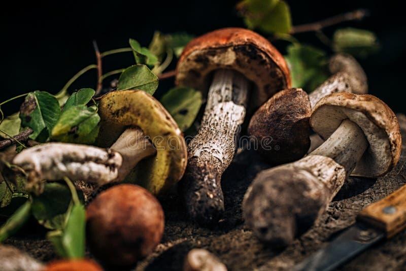 Cogumelos em um coto de madeira foto de stock royalty free