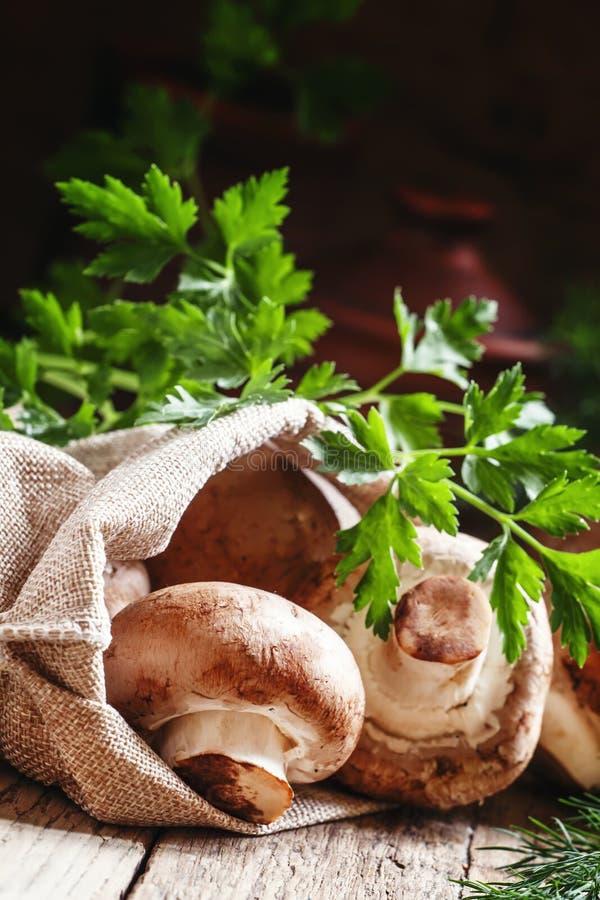 Cogumelos em um saco de serapilheira, colheita do outono, foco seletivo fotos de stock royalty free