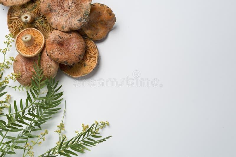 Cogumelos empilhados em um fundo branco foto de stock royalty free
