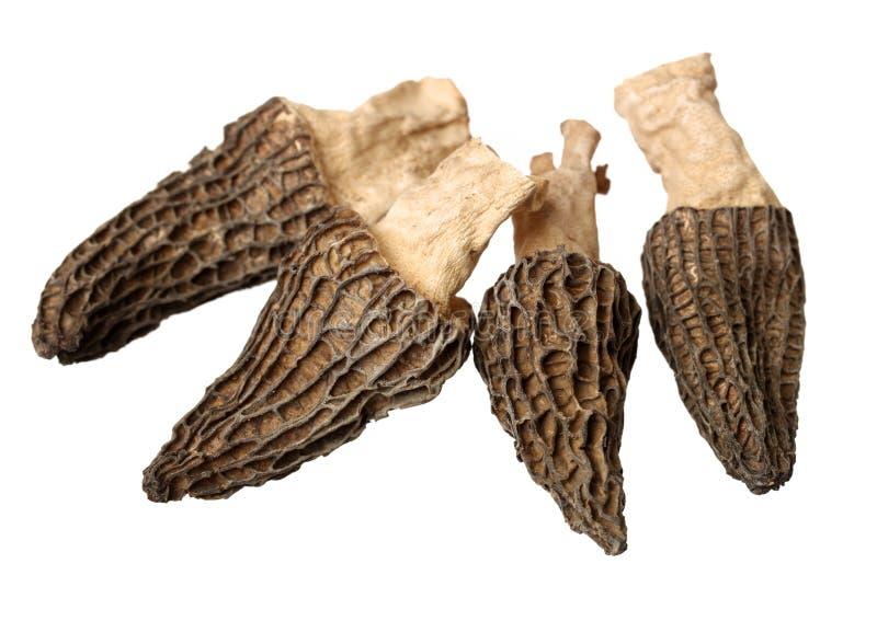Cogumelos escolhidos do morel imagens de stock royalty free