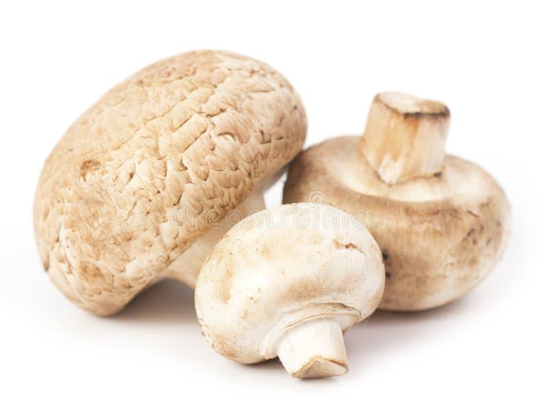 Cogumelos frescos imagens de stock royalty free