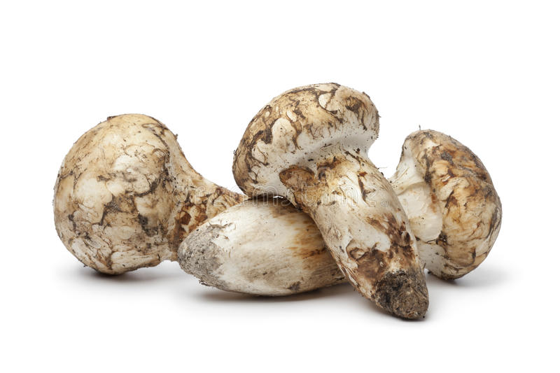 Cogumelos frescos de Matsutake fotos de stock royalty free