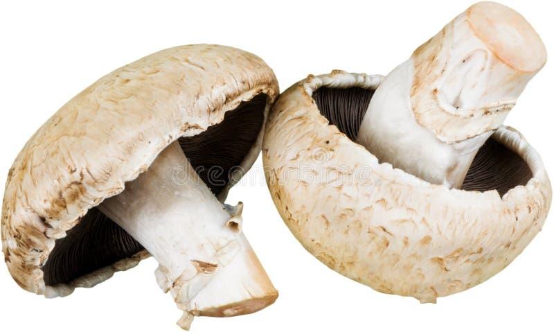 Cogumelos frescos dos cogumelos Isolado no branco fotos de stock