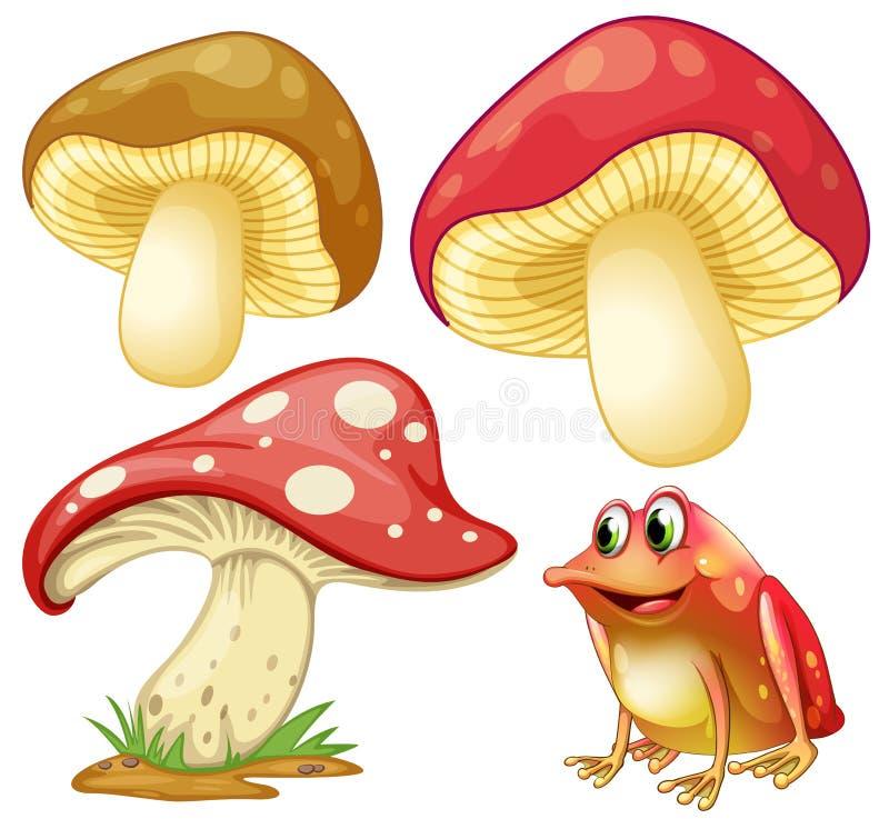 Cogumelos frescos e rã vermelha ilustração do vetor