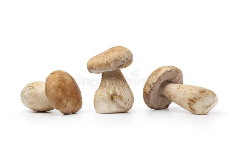 Cogumelos frescos inteiros do porcini foto de stock royalty free