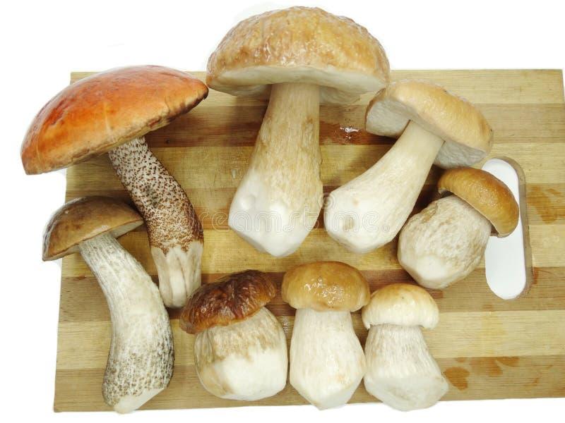 Cogumelos frescos na placa de estaca imagens de stock royalty free