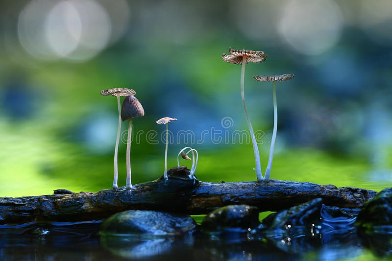 Cogumelos incomíveis do tiro macro foto de stock royalty free