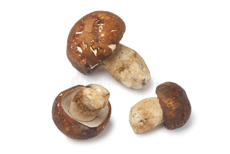 Cogumelos de Porcini imagem de stock royalty free