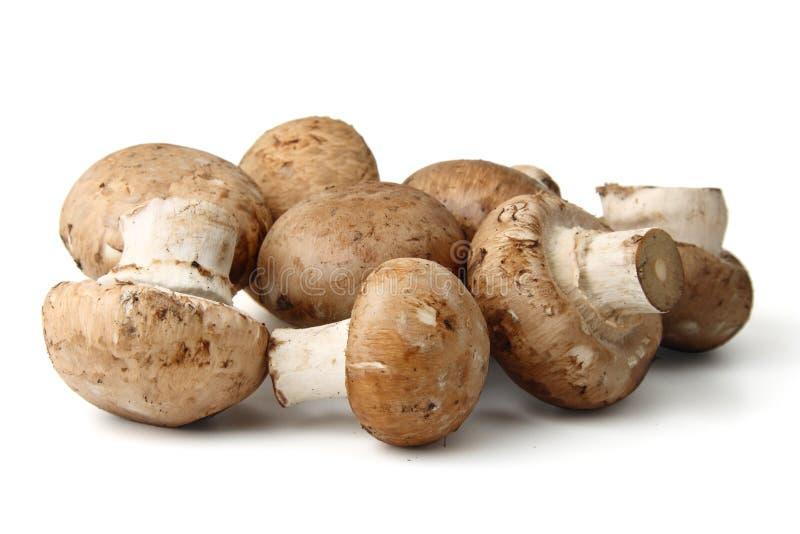 Cogumelos isolados imagens de stock royalty free