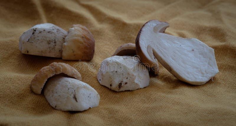 Cogumelos limpados do boleto foto de stock