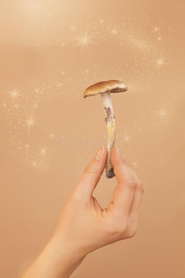 Cogumelos mágicos na mão da mulher imagens de stock royalty free