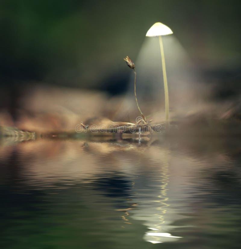 Cogumelos místicos brancos venenosos da imagem imagem de stock