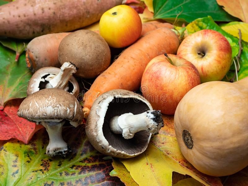 Cogumelos, maçãs, patato doce, polpa de butternut e cenouras AR fotos de stock royalty free
