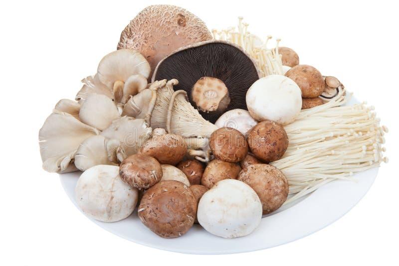 Cogumelos misturados fotografia de stock