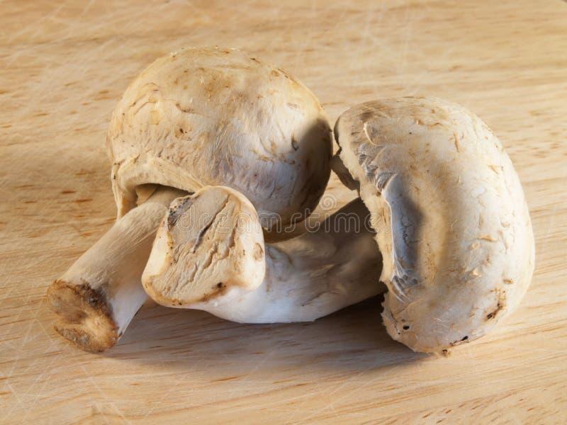 Cogumelos na placa de madeira. Cogumelos frescos. fotografia de stock