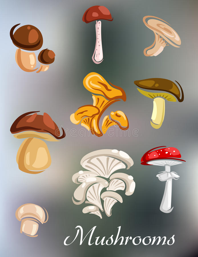 Cogumelos naturais da floresta ilustração do vetor