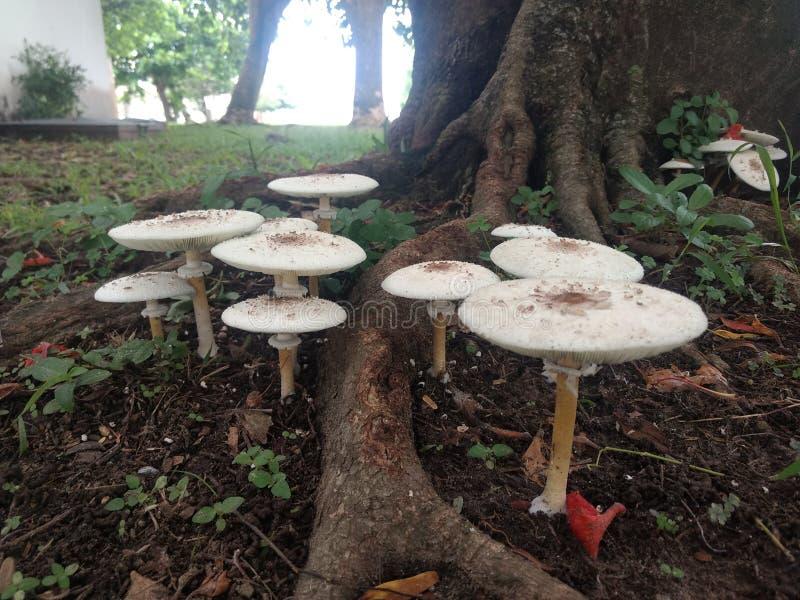 Cogumelos no pé de uma árvore imagens de stock