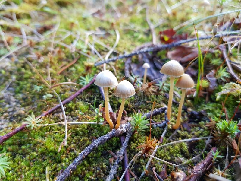 Cogumelos pequenos imagem de stock
