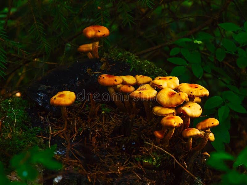 Cogumelos que crescem em um topo foto de stock