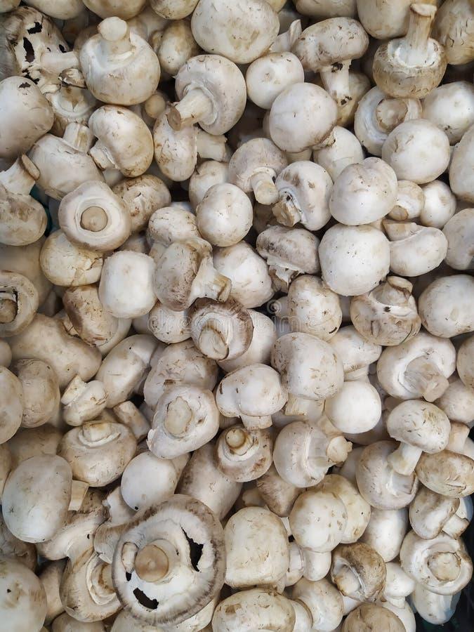 Cogumelos reais do cogumelo cogumelos marrons do cogumelo textura real dos cogumelos do cogumelo cogumelos reais crus fotos de stock