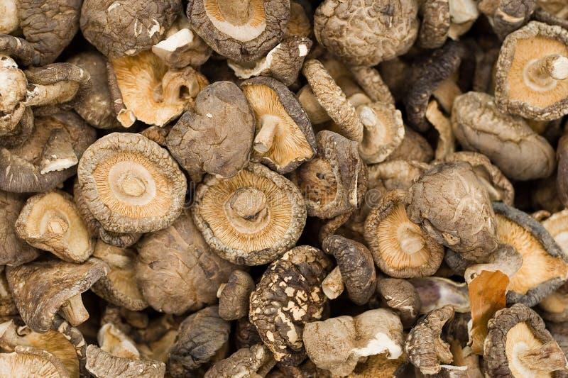 Cogumelos secados foto de stock royalty free