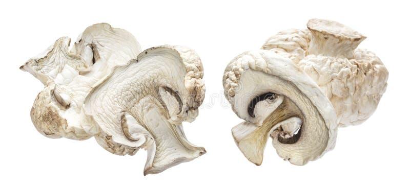 Cogumelos secados isolados no fundo branco fotografia de stock