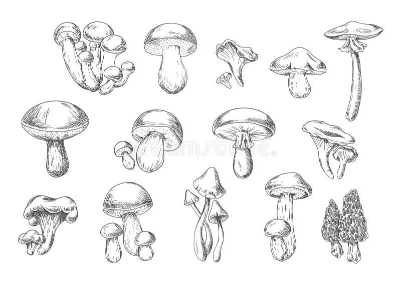 Cogumelos selvagens comestíveis e venenosos, estilo do esboço ilustração do vetor