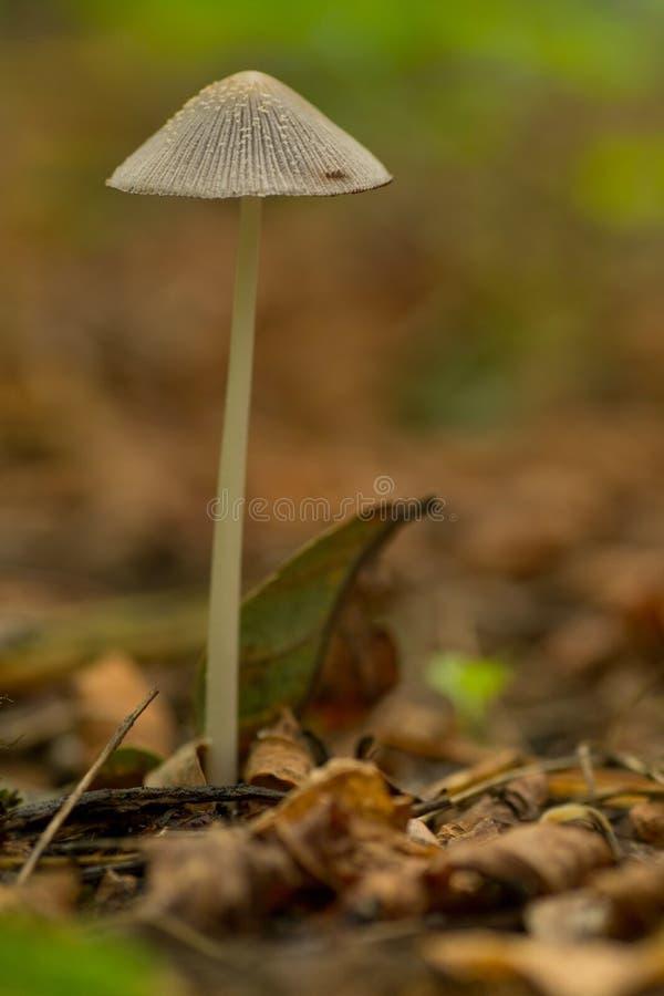 Cogumelos selvagens que crescem acima no fim da floresta acima imagens de stock royalty free