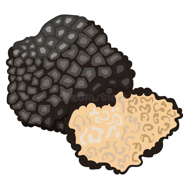 Cogumelos: trufa ilustração stock