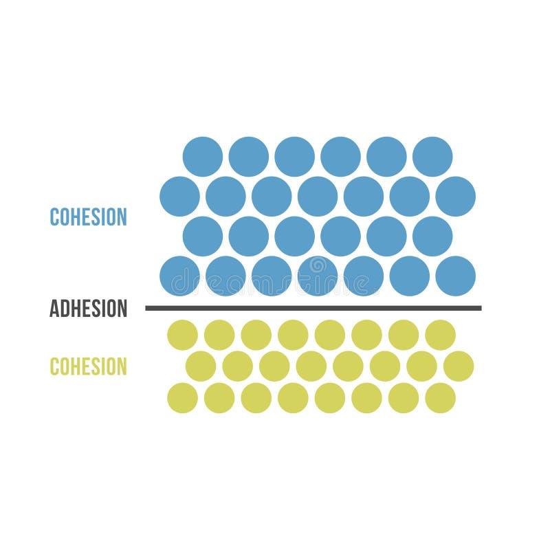 Cohesión y adherencia ilustración del vector