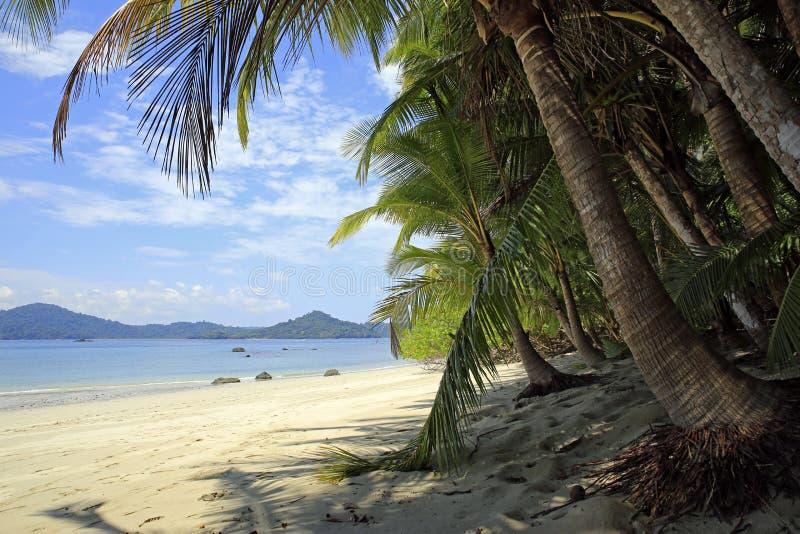 Coibita热带海滩 免版税图库摄影