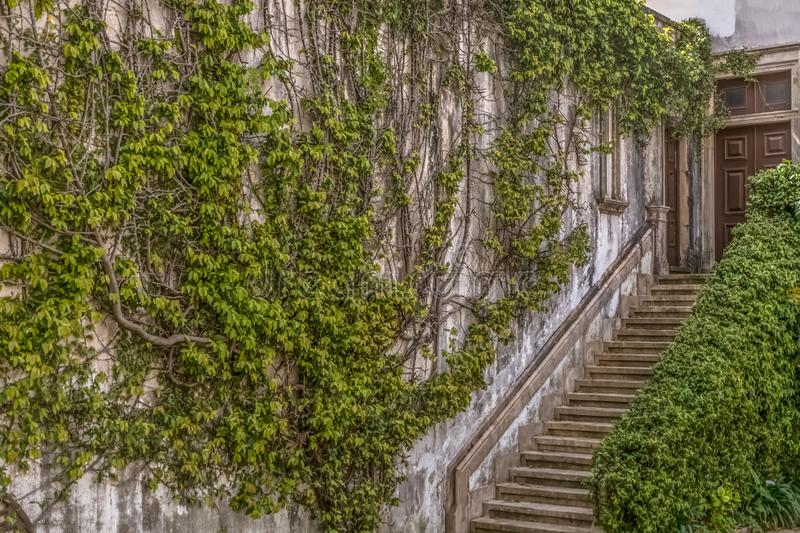 Coimbra / Portugal - 04 04 2019 : Interior view of the University of Coimbra , law department building, Melos Palace, climbing. Wall plant and classic staircase royalty free stock images