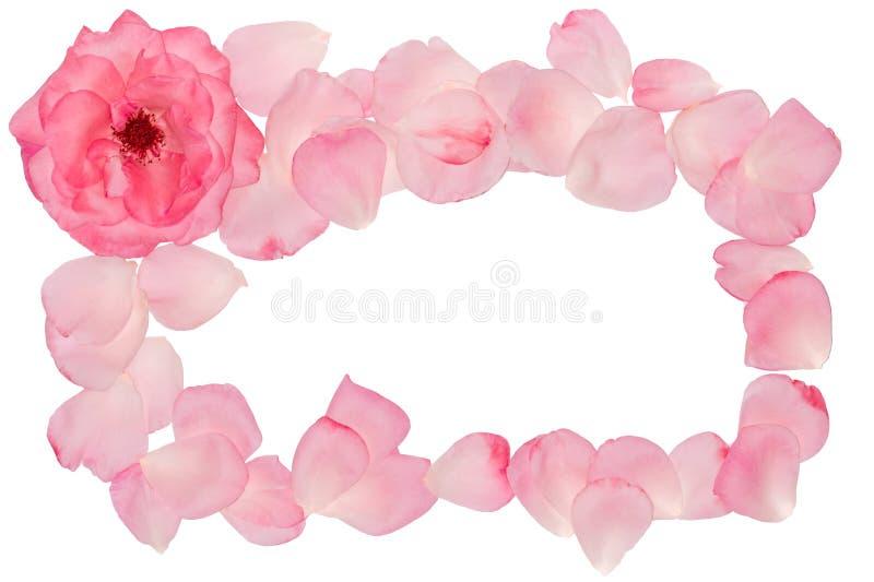 Coin des pétales roses Vue pour une photo Titre décoratif image stock