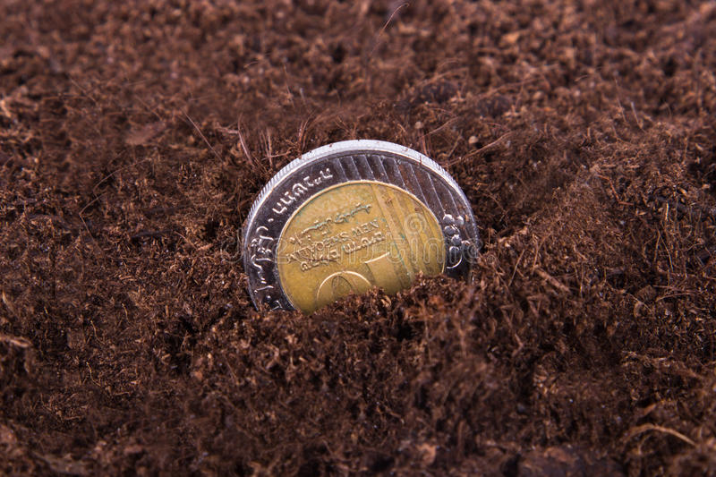 Coin Growing in Soil. Single coin growing in soil stock photography
