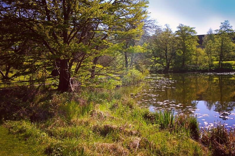 Coin tranquille avec l'étang en parc de Copenhague photo libre de droits