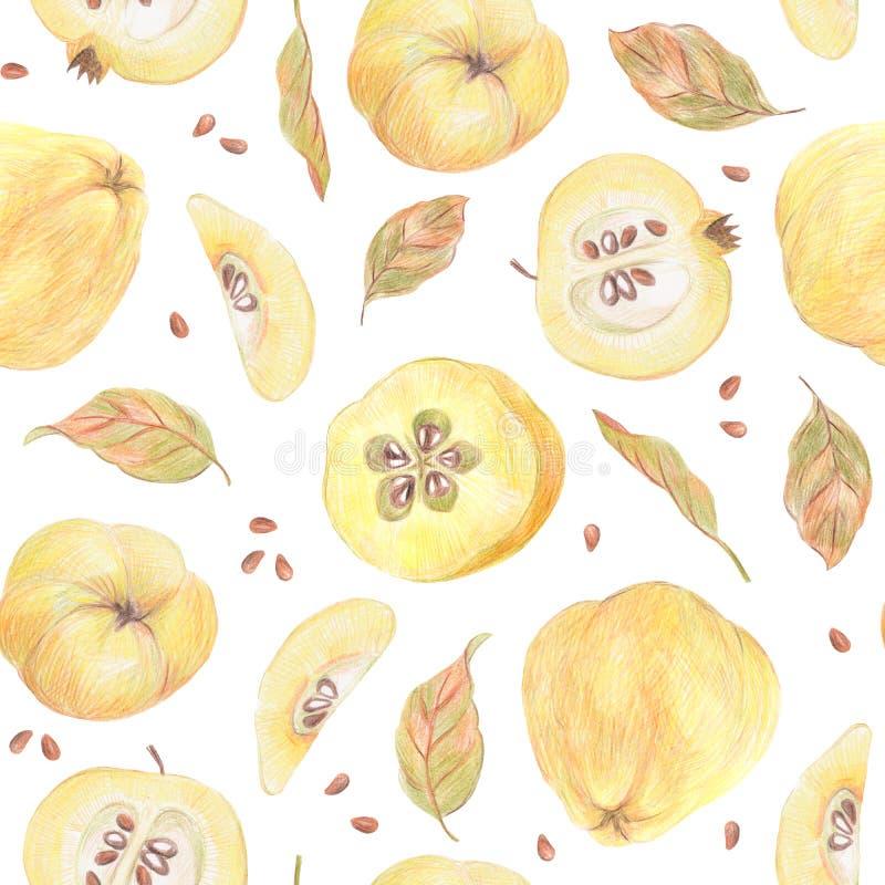 Coing, feuilles et graines peints avec les crayons colorés d'isolement sur un fond blanc Configuration sans joint de nourriture illustration libre de droits