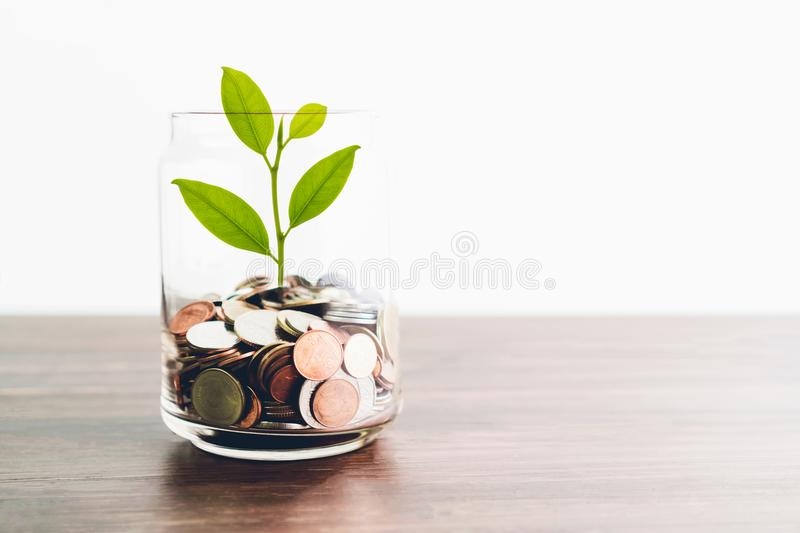 Coins in a bottle and the green tree, Represents the financial growth. The more money you save. stock photos