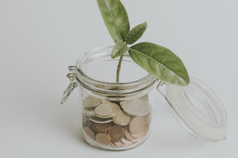 Coins in a glass jar with a green plant growing inside, on white background, with vintage filter. Coins inside a glass jar with a green plant growing inside it stock photos
