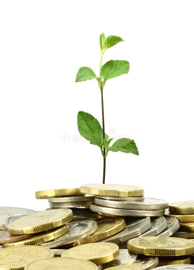 Coins money tree stock image
