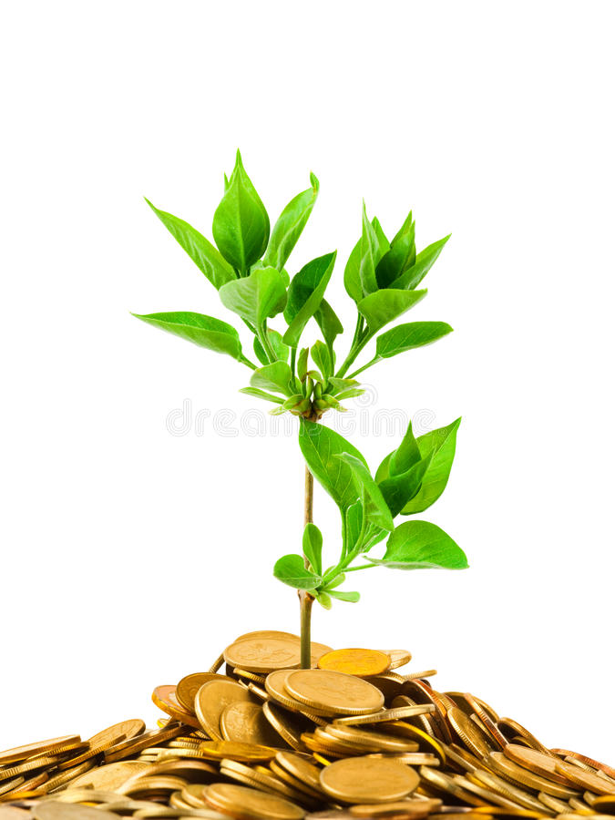 Coins and plant. Isolated on white background royalty free stock photo