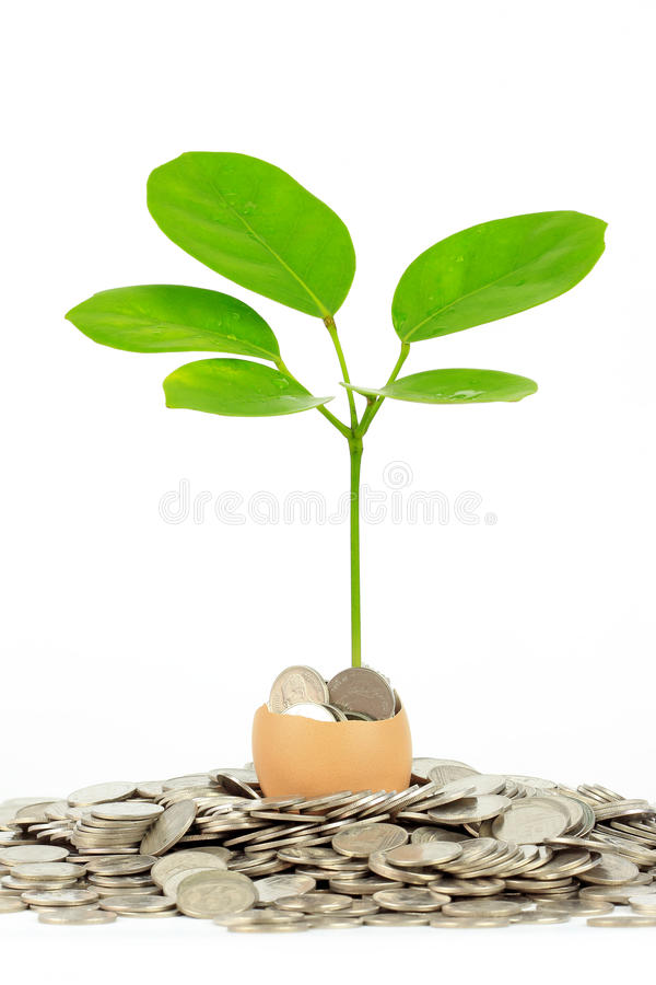 Download Coins And Plant In Eggshell Stock Photo - Image: 24990342