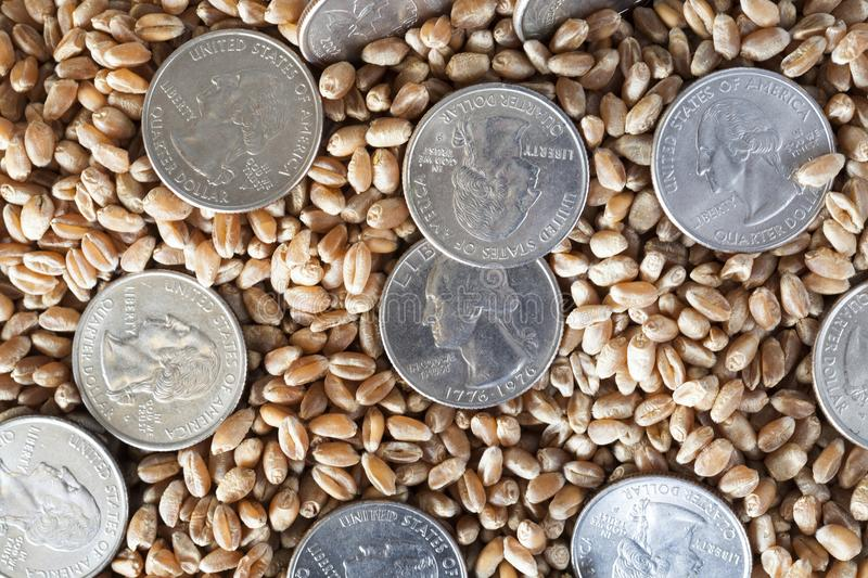 Coin american and grain. Coins in a quarter of the US dollar lying on a pile of wheat grain, a close-up of agricultural activities and finance royalty free stock image