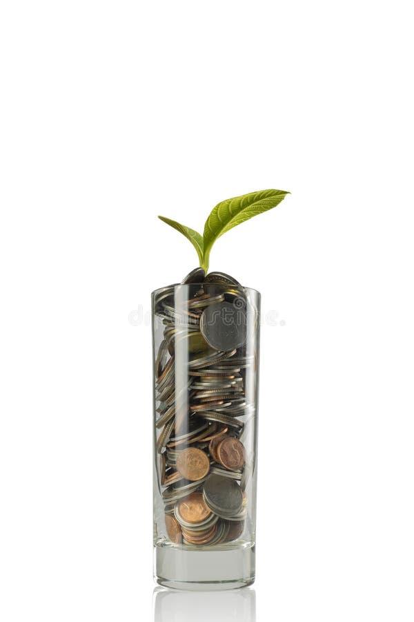 coins sparande för stapel för begreppshandpengar skyddande royaltyfri foto