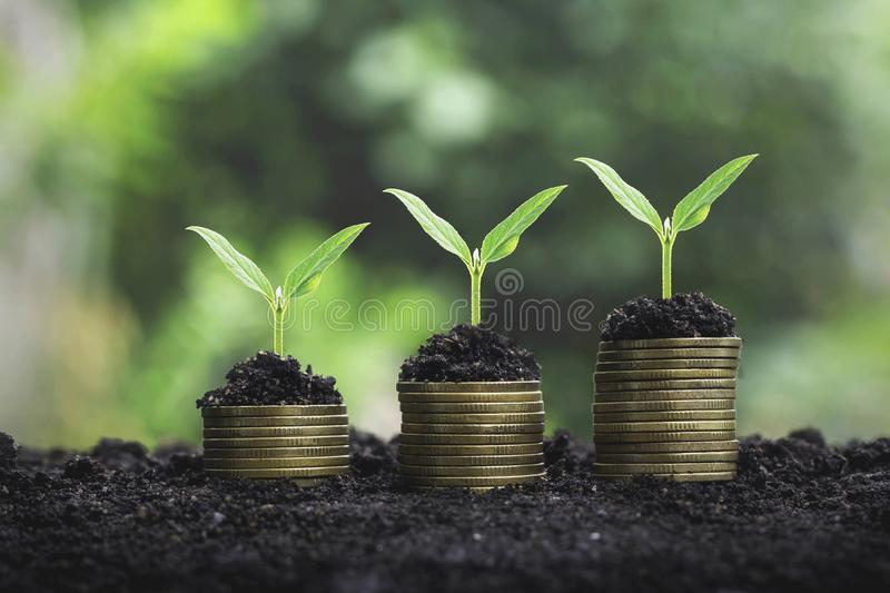 Coins stack with step growing plant and sunshine background. concept saving money stock photos