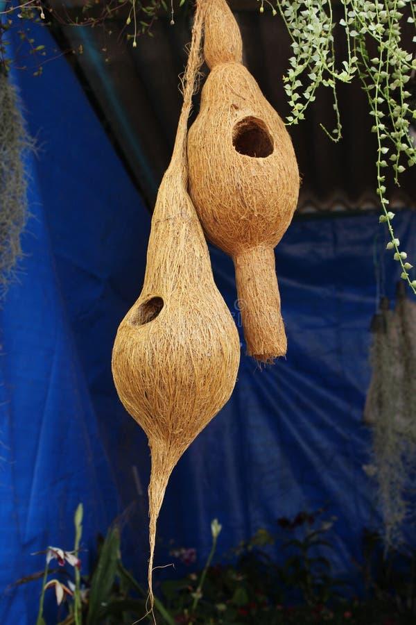 Coir-hängendes Vogel-Nest lizenzfreies stockbild
